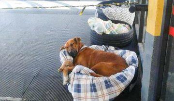 В холодную погоду сотрудники автовокзала организовали ночлег для бездомных собак