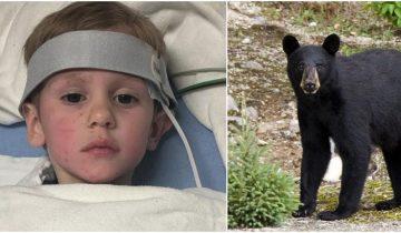 Спасатели в лесу нашли потерявшегося мальчика, ребенок заявляет, что выжить ему помог медведь