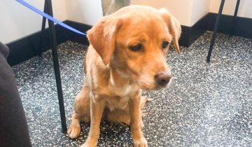 Сама нашла себе хозяина: парень утром в своем доме нашел бездомную собаку, хотя все окна и двери были заперты