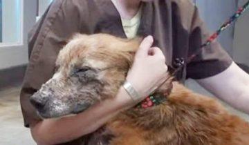 На границе между жизнью и смертью: волонтеры спасли собаку в пустыне
