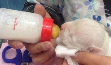 Крошечному щенку собака отгрызла лапку. Оберегать сиротку взялись коты