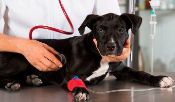 Хозяин попросил врача усыпить собаку, которая ему надоела. Но ветеринар решил иначе