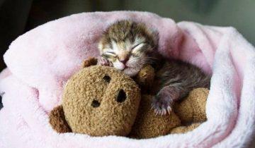 Крошечный котенок отчаянно боролся за жизнь. В этом ему помогла четвероногая спасительница