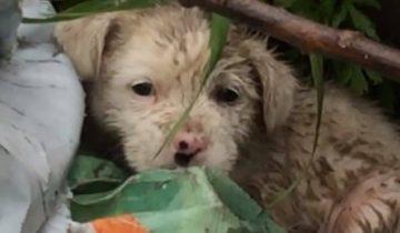 Шел проливной дождь, а на свалке дрожал от холода крошечный щенок