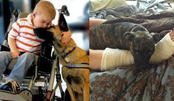 Подборка фотографий, которые докажут, что собака нужна каждому человеку!