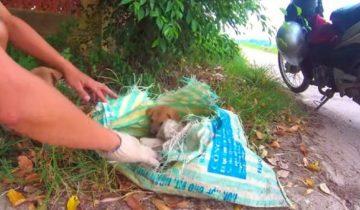 Парень заглянул в мешок, который он достал из кучи мусора. Оттуда показалась мордашка щенка