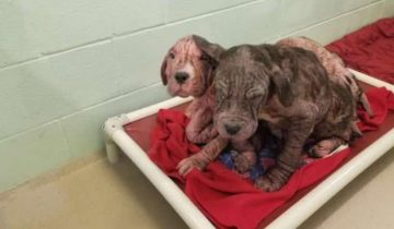 На обочине лежало пять больных щенков. К счастью, их заметили люди
