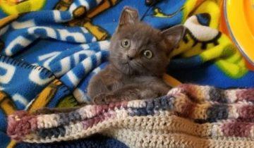 Котенок, с парализованными лапками, снова ходит вопреки всем прогнозам
