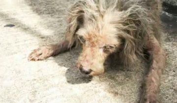 «Второй шанс для крохи»: бездомная собака чуть не погибла
