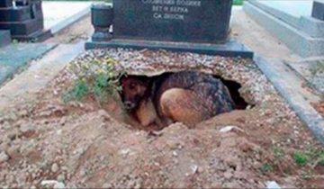 Все полагали, что собака скорбит по своему владельцу, пока не увидели, что находится под ней