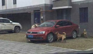 Выходя из авто, он пнул бездомную собаку. Но когда вернулся, то застыл на одном месте…