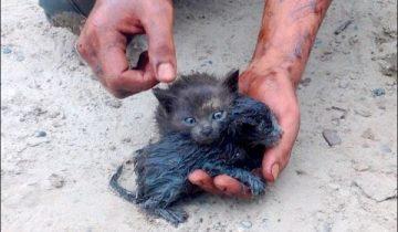 Парень героически вытащил двух беспомощных котят из разлившейся нефти