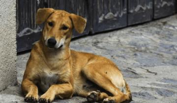 Вместо благодарности — рычание: девушка помогла собаке, а та оказалась с жестким характером