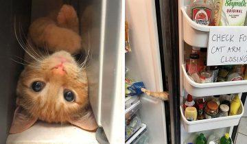 Котик Морковка прославился в сети всего из-за одного фото. И оно встревожит любого владельца