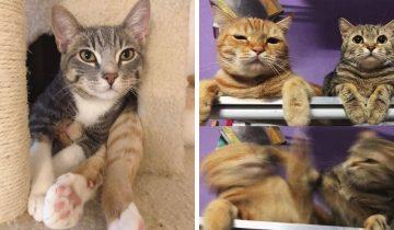 15 фото кошачьих сестер и братьев, у которых от любви до ненависти всего дно громкое «мяу»