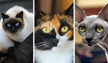 Красивые и интересные имена для кошек — 10 кличек для разных пород