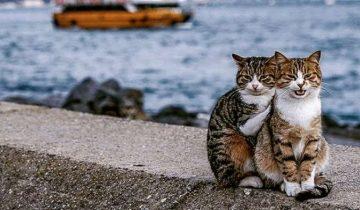 Парень сделал фото обнимающихся бездомных котов и оно очень трогательное