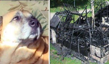 Собаку спасли во время пожара, а через пару месяцев она привела людей к черной дыре в сгоревшем доме
