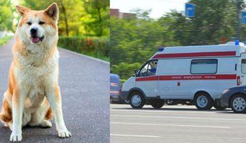 Собака перегородила дорогу машине скорой, медбрат попытался ее прогнать, но пес упрямо возвращался