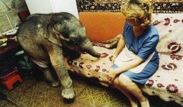 Слоненок в одесской квартире: удивительная история