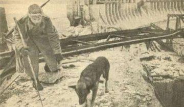 Джульбрас — легендарная овчарка герой войны