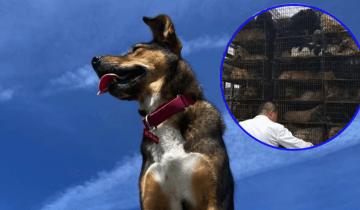 Собаку чудом спасли от скотобойни. В благодарность она несколько раз спасла жизнь хозяину