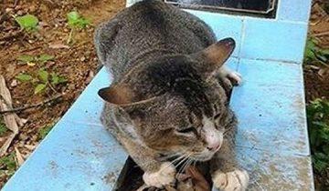 Котик каждый день приходил к хозяину на могилу. Это трогает до слез