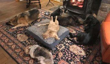 Когда наглость — второе счастье. 15 котиков, которые забрали спальное место даже у собак