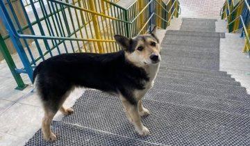 В Красноярском регионе альпинисты спасли пса с опасного обрыва