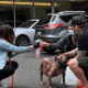 Семья сумела найти любимую собаку после четырех лет поисков
