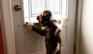 «Обними меня, если уходишь!» — думает песик, когда сидит у двери. Его «правилам» все следуют