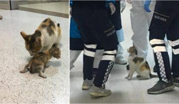 Мама-кошка принесла котенка в больницу скорой помощи. Врачи осмотрели малыша