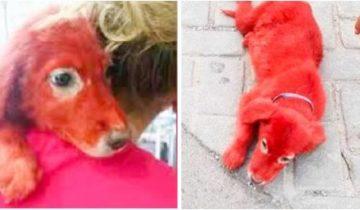 На рынке в Греции продавался щенок очень необычного окраса…