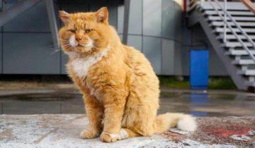 Кеша — единственный котик, который живет на архипелаге Шпицберген в Норвегии