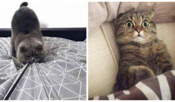 15 смешных фотографий в которых вся суть котов