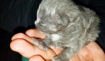 Парень нашел в своей лодке крошечного котенка и он стал его лучшим другом