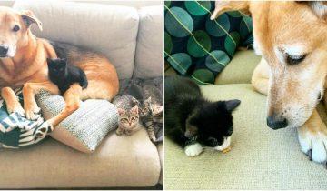 Женщина спасла от усыпления собаку, а она стала заботиться о ее котятах