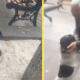 Мужчина встретил собаку, которую напрасно искал целых 3 года