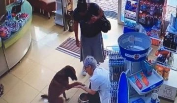 Умный песик зашел в аптеку и попросил медиков о помощи