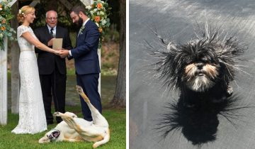 10 фотографий с собаками, которые 100% знают, как не дать владельцам заскучать