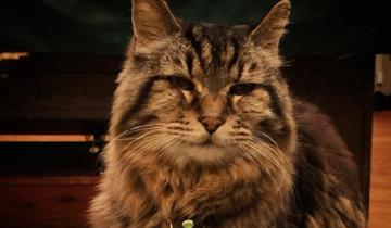 Девочка взяла из приюта котенка в 1989 году и даже не думала, что он войдет в историю