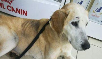 Владелец оставил слепую собаку зимой в поле, но ее успели спасти волонтеры
