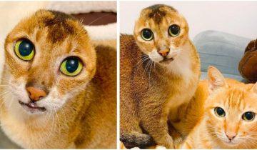 Котик без ушек Картошка нашел не только новый дом, но и преданных друзей