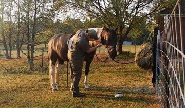 Девушка показала всем, как выглядит ее лошадь летом и зимой, и поразила всех