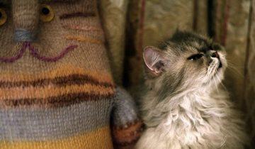 Пять причин, почему кошка может гадить в постель хозяина