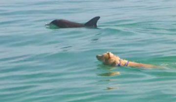 Лабрадор каждый день отправляется на пристань, чтобы поплавать с дельфином