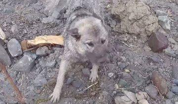 На месте гигантского оползня в Норвегии удалось спасти собаку!