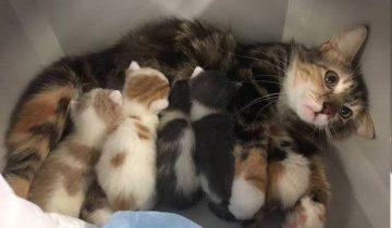 Животные, которые познали счастье материнства, и явно пожалели об этом