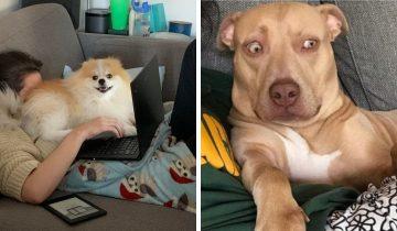 15 фото смешных и дурашливых собак, которые не дают владельцам скучать