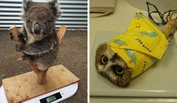 13 милых фотографий, которые показывают, на какие хитрости приходится идти, чтобы узнать вес животных в зоопарке